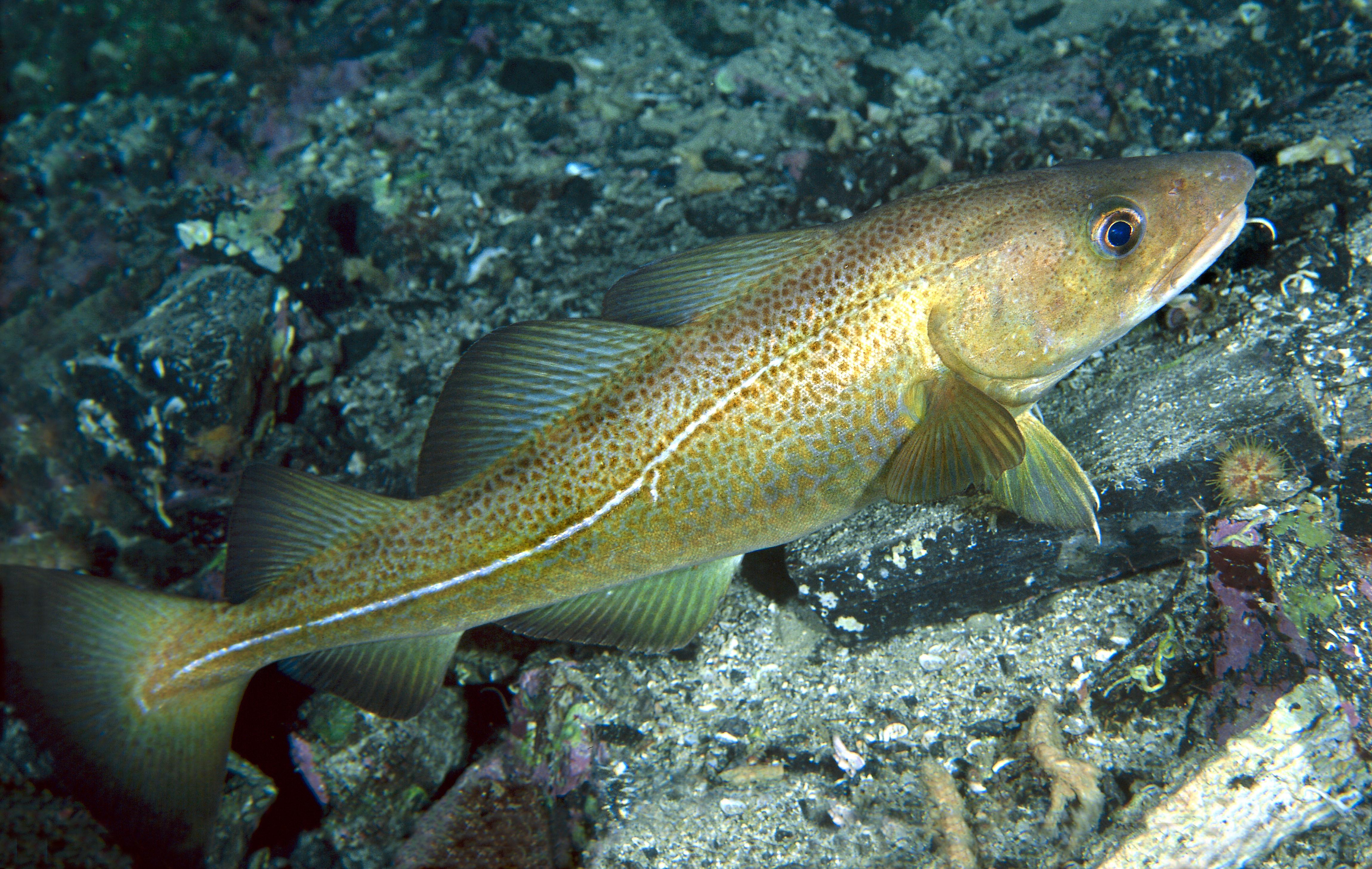 wwf fiskguide 2016